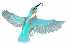 Kingfisher by gismo84