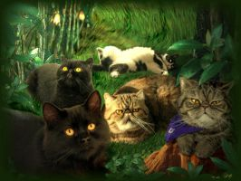 My Cats by pasavign
