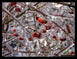 Iced Over Berries III by St0DaD