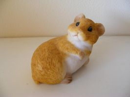 Hamster by KNK-Photography
