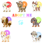 PUPPY AFOPTABLES FOR SALE - OPEN by Felixcani
