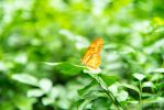 Butterfly Enclosure, Bronx Zoo by zone-zero