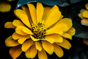 Yellow Flower by technogeek11