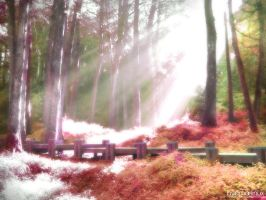 Bosque by omarlinux