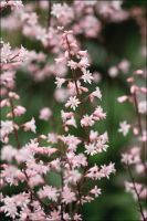 Tiny pink flowers by Eruwyn