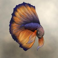 Betta Fish by ClemiKinkajou