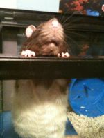 Leo the rat again C: by Simplications