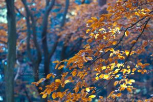 Autumn Woods II by kuschelirmel
