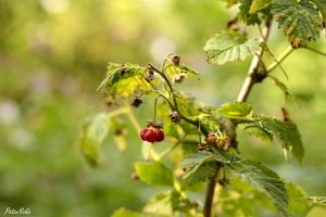 Berry Bokeh by potzuyoko