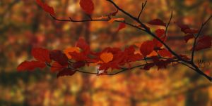Autumn Leaves by MarloesW