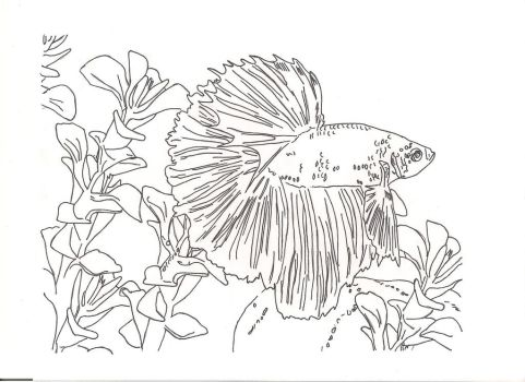 Betta fish by countrygirllover