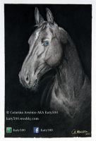 Horse Portrait 3 by Katy500