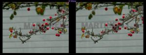 Cross view 3D Berries by shawnrl61