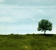 Lonely Tree 8 by Iulia-Oprinesc