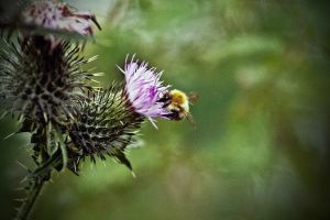 Busy Bee Edit by New-Dawn-Productions