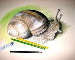 Snail by Chise-chan