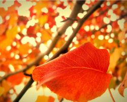Fall Colors by Alesana-x-Fan