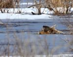 An Otter surprise by natureguy