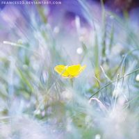 A Single Buttercup by Frances23