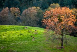 Deer on Bull Hill by kayaksailor