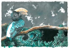 silvery-cheeked hornbill by bwcopy