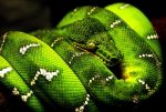 Wild Snake 15250032 by StockProject1