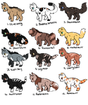 Warrior cats : Write to adopt by ThePotato-Queen