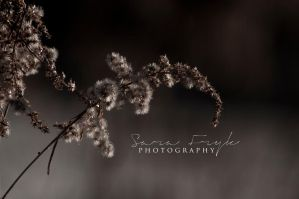 It's SPRING, in SWE by sarasphotography