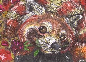 Romantic little red panda by Wildloverwithwolfs