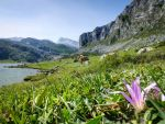 Picos de Europa 105 - Mountain lake and crocus by HermitCrabStock