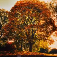 Sunlit Autumn trees by NeoJoeArt1997
