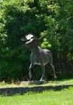 the Moose Sculpture at UMA by FlowerFreak