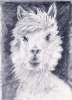 No.........It's NOT  a Llama, it's an Alpaca. by mr-macd
