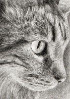 Tabby ACEO by pawtraits