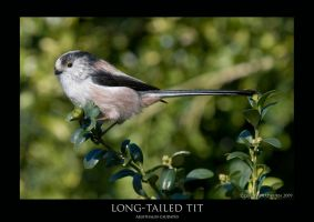 LTT.1 by THEDOC4
