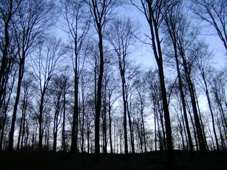 Beech forest at dusk by ArtyD2