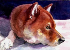 Red Dog by Pickleweasels