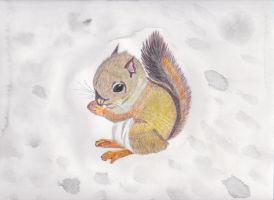 Baby Squirrel by zolicon