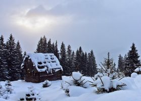 Winter in Bukovina. by lica20