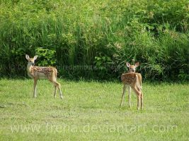 Twin Fawns Dawww by Freha