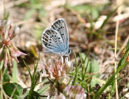blue butterfly 5 by Kristinaphoto