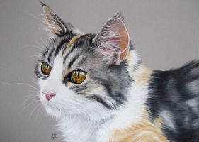 Tita 3 Beautiful cat in pastel by mo62
