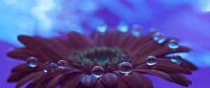 Meeting of the drops by pqphotography
