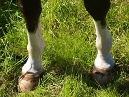 Hooves... by zippostock