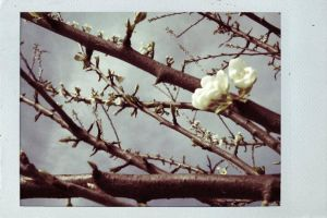 Welcome Spring by Thasitalia
