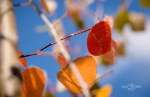 Aspen Color by StephGabler