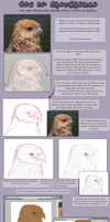 A Sort of Semi-Realism Tutorial by The-Nutkase