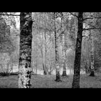 Back to reality III_into the wood by alisinwonder