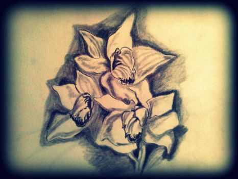 flower drawing with model by Arioch85