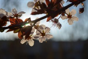 i WANT spring by ittvalahol